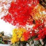 秋の白川郷へ行ってきました。